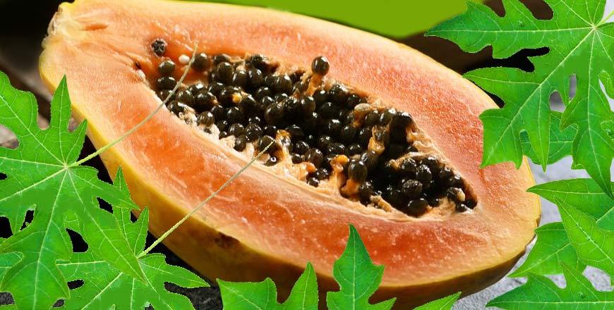 Papaya Fermentada FPP: Immunage fortalece el sistema inmunitario